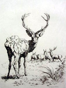 Antique Etching by Robert Hills - Deer