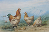Chickens - 19th Century Painting