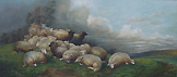 Sheep on Burrator