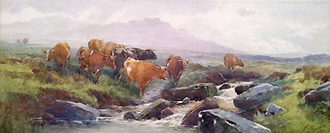 Tom Rowden - Dartmoor Cattle