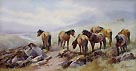 Tom Rowden - Ponies at Rattlebrook Dartmoor
